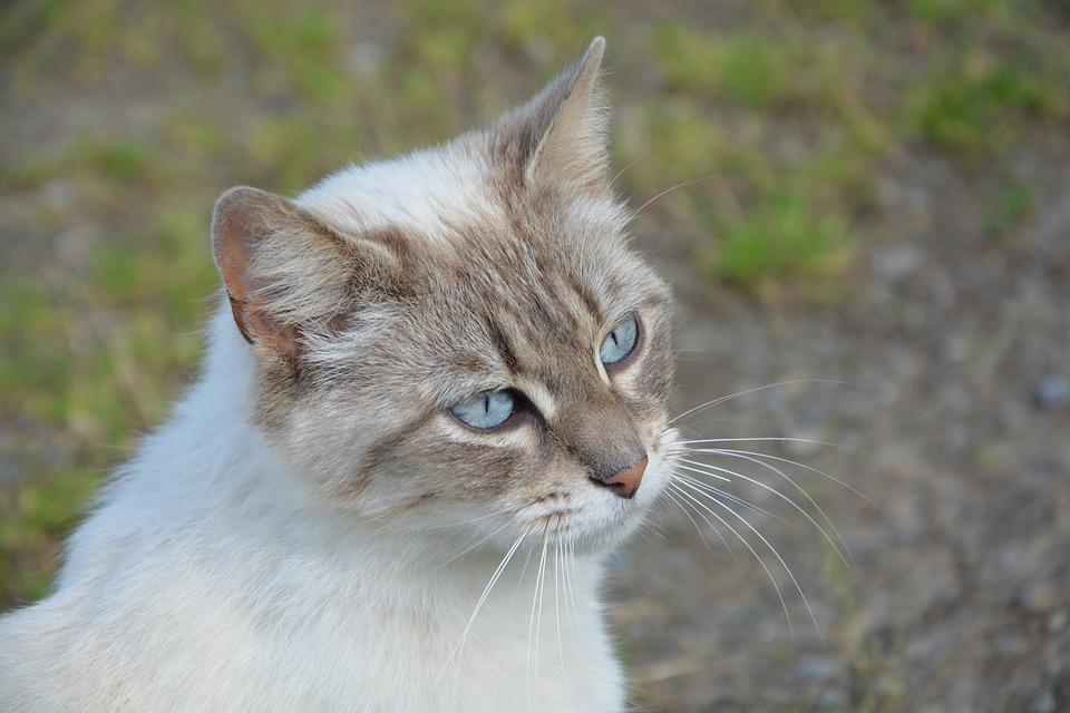 Futterbar Katze selber bauen