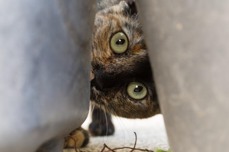 Katzenm bel seite 3 interessantes f r katzenfreunde - Katzenmobel selber bauen ...