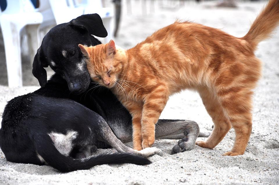 Tierschutzpreis