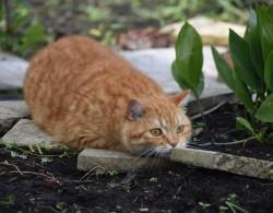 Katzengehege bauen