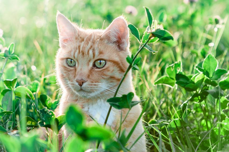 Katze Sommer Abkuehlung