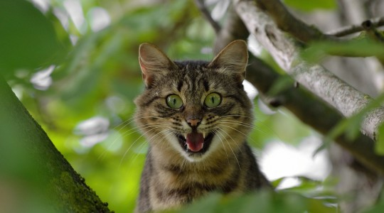 Stresshormone Katze
