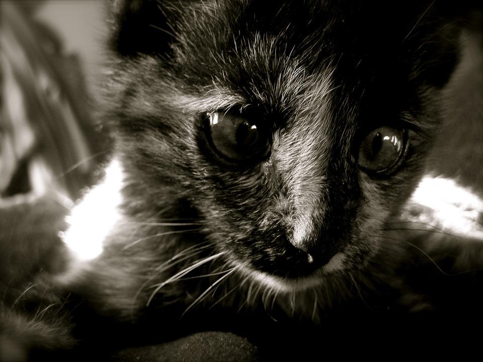 scheue Katzen zaehmen