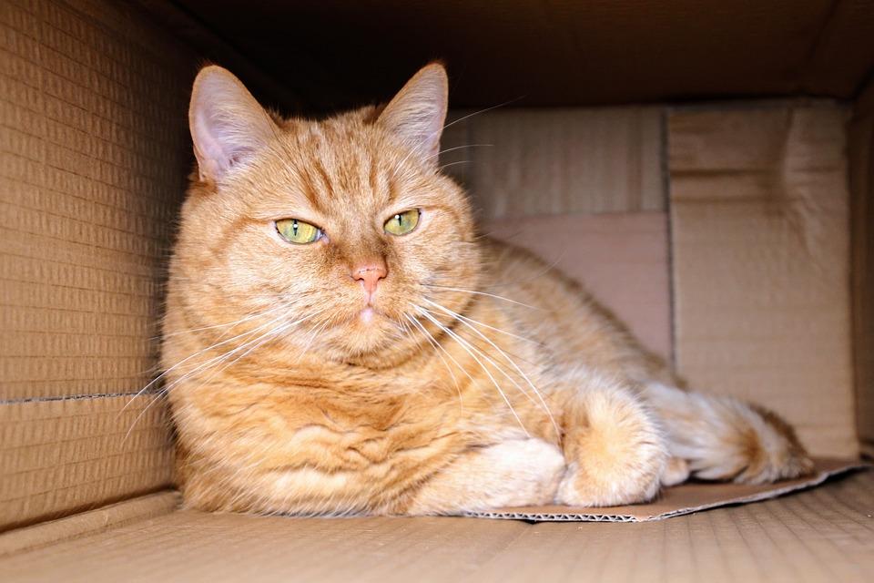 Bastelideen für Katzen