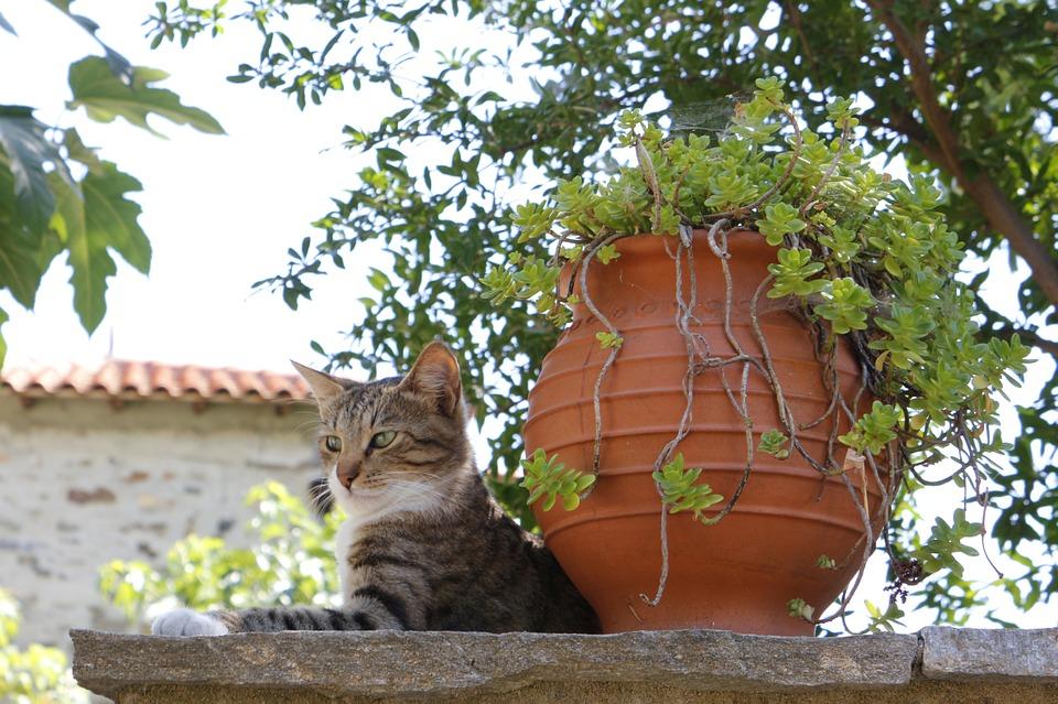 Jobangebot Katzensitter Griechenland