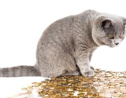 Sparplan Katze Vorteilsprogramm