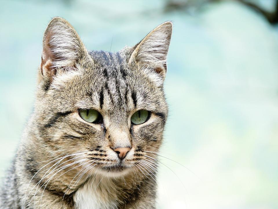 Katzen Filmtipp