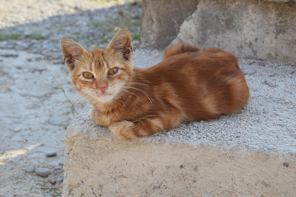 Katzenfutterstelle betreuen