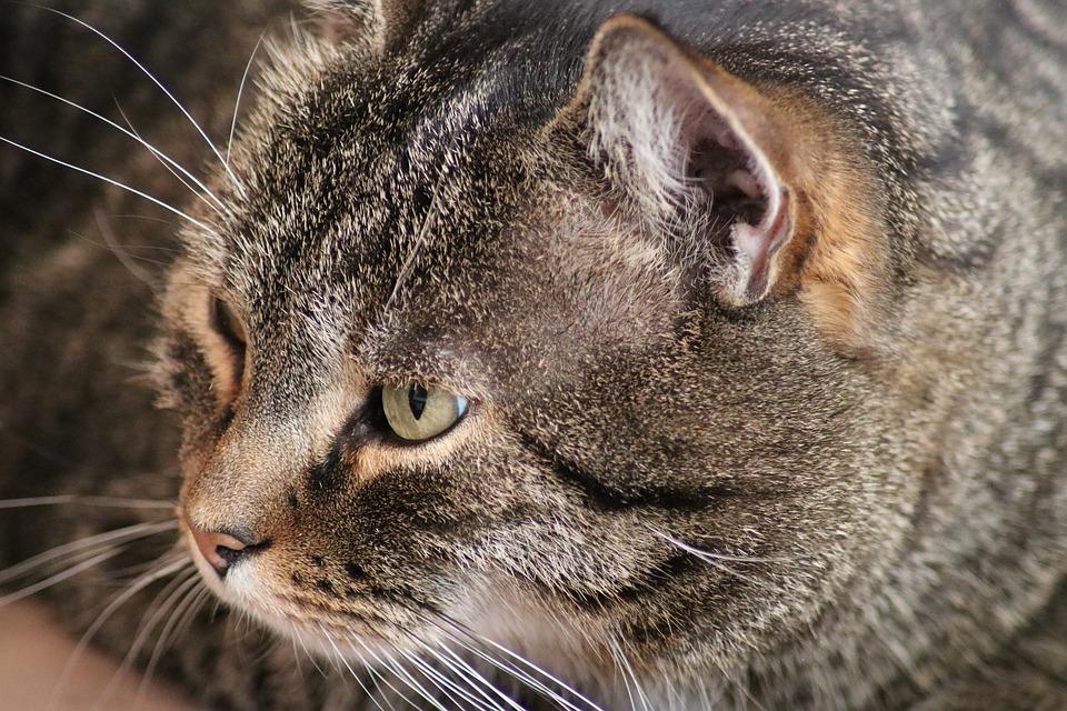 Katzensachen Aldi