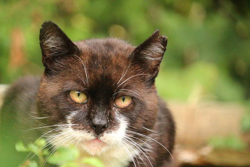 Wer ist fuer Streunerkatzen zustaendig