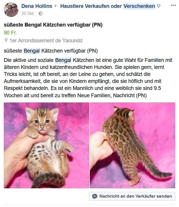 Betrug Katzen Facebook