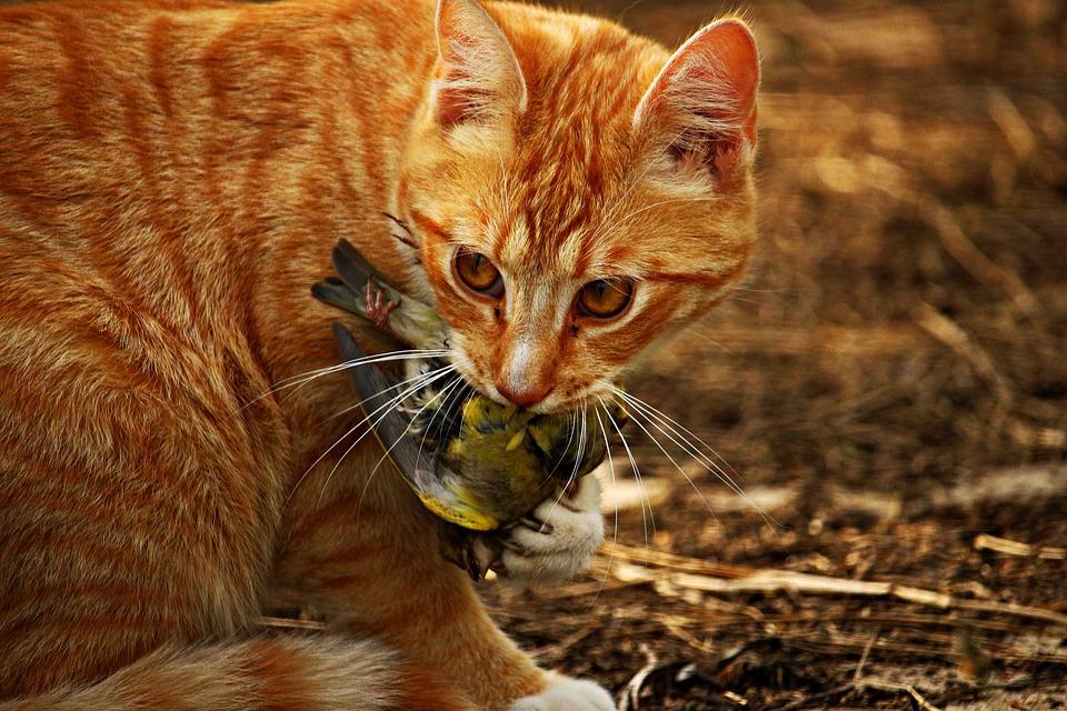 Katze Vogelkiller