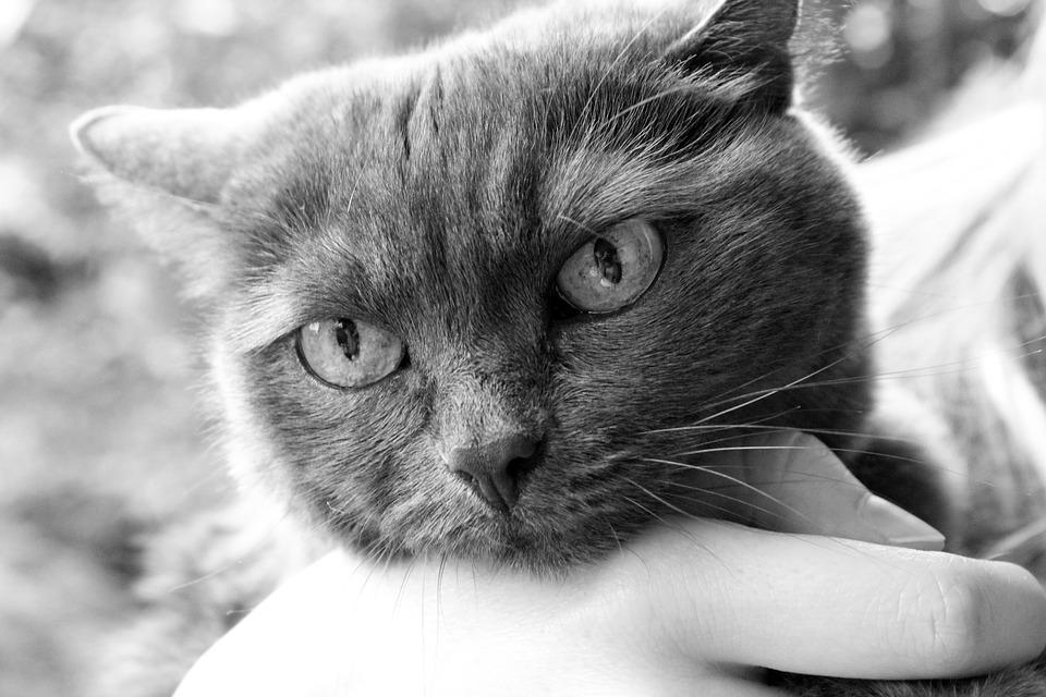 Katze Tierarzt Handling