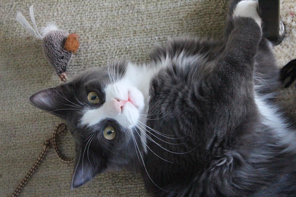 Ueberraschungsboxen Katzen
