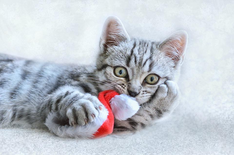 DIY Katzen-Weihnachtskugel
