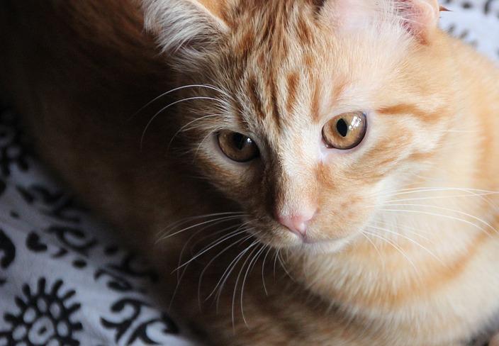 DIY Katzenspielzeug Papproehren