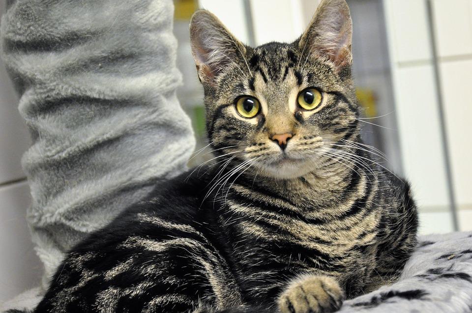 Katzenfutter Angebot Animonda
