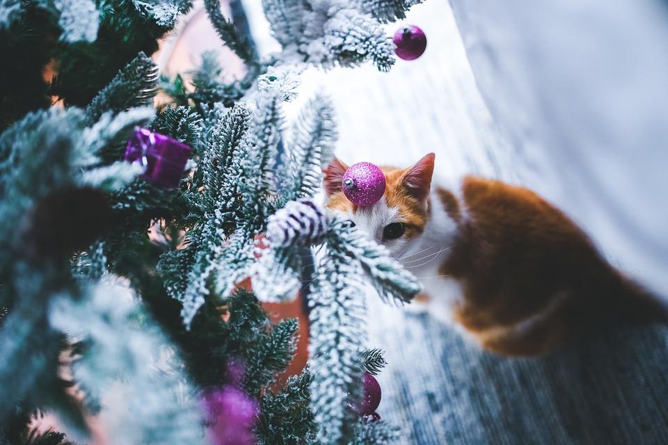 Weihnachten Katzen
