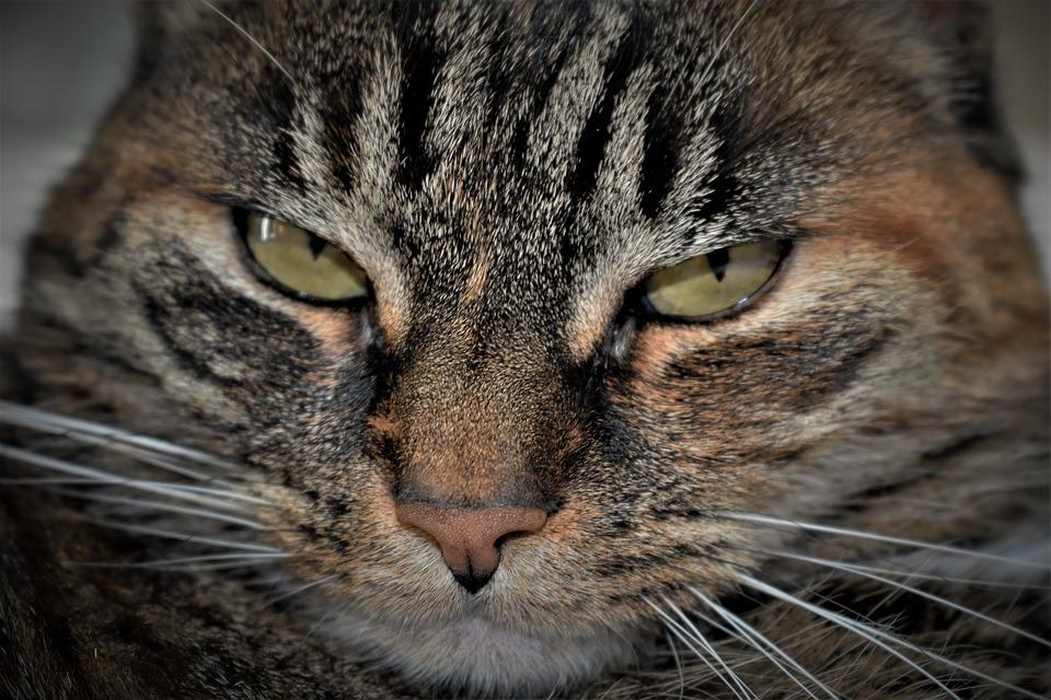 Glyphosat in Katzenfutter