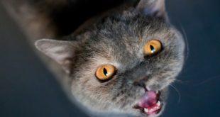 Katzen-Futterautomat selber bauen