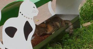 Katzen-Futterstelle Streuner