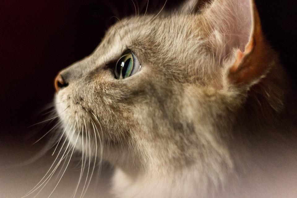 Orijen Katzenfutter