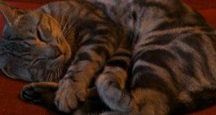 Katzenbaelle haekeln