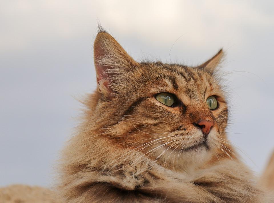 Futterbar fuer Katzen selber bauen