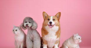 Hund oder Katze Filmtipp