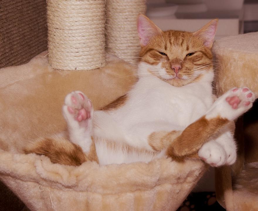 Katze an Kratzbaum gewoehnen