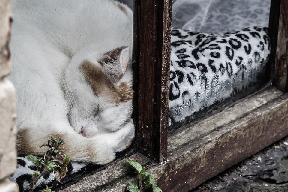 Katzenbett Fensterbrett