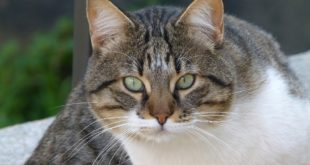 Schatzkiste Katze getreidefrei