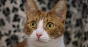 Ueberraschungsbox Katze getreidefrei