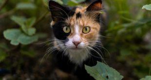 Giardien Giardiose Katzen
