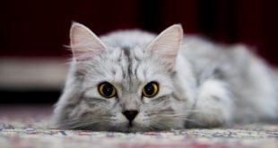 Katzenkuscheltier aus Kuschelsocke