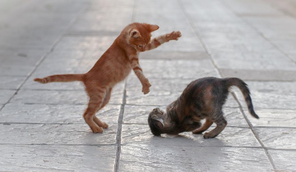 Kitten zu vorhandener Katze