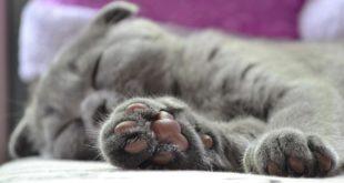 DIY Katzenpfote haekeln