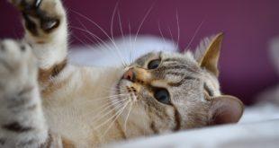 Spielzeug fuer Katzen selber machen