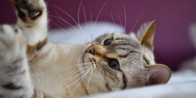 Spielzeug Für Katzen Selber Machen 7 Ideen Mit Anleitung