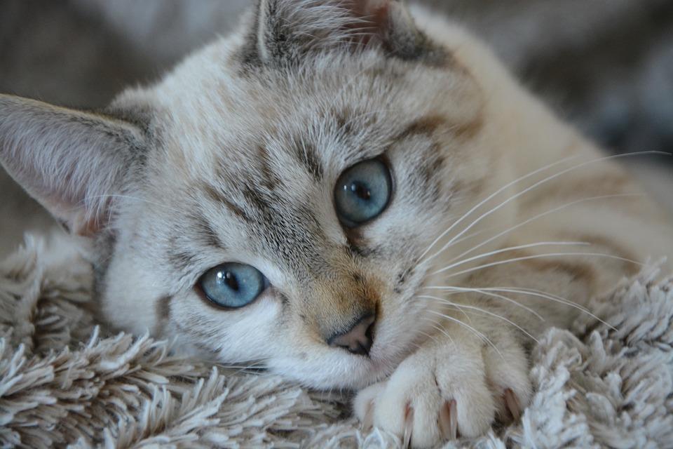 Versteck Katzentoilette bauen
