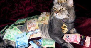 Katze aus Geldschein falten