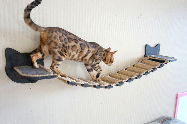 Katzen Haengebruecke