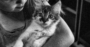 Umarme Deine Katze Tag