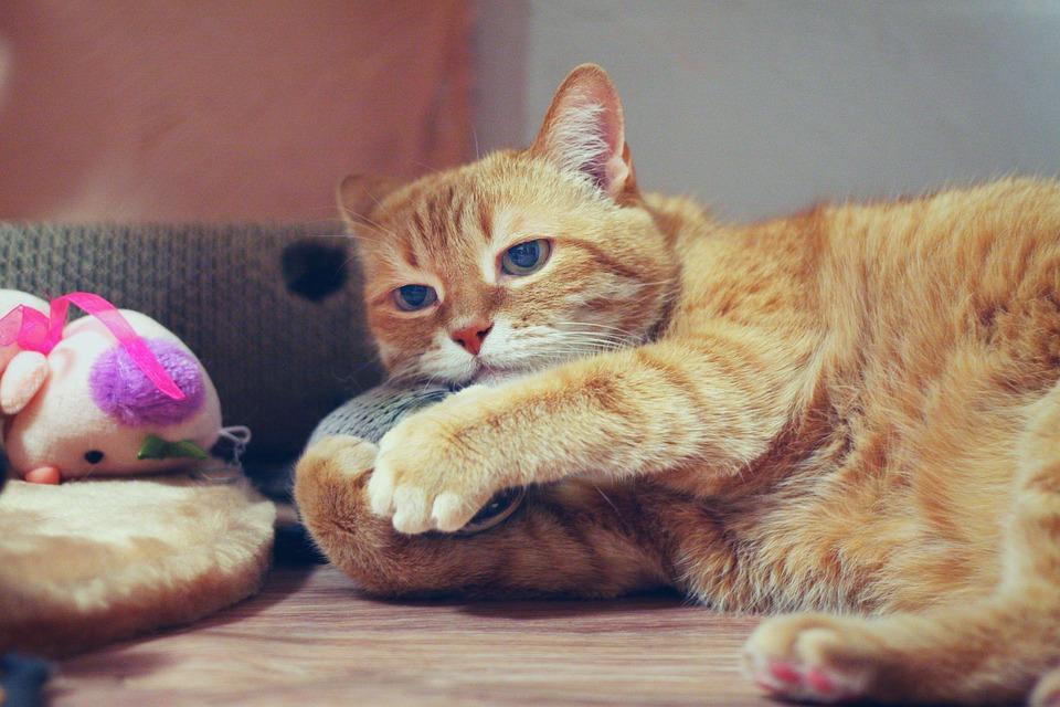 Baldriankissen fuer Katzen selber machen