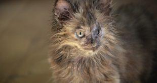 Chlamydien bei Katzen