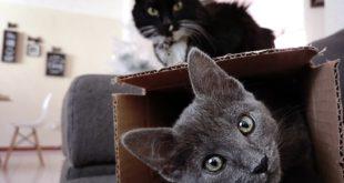 Interaktives Katzenspielzeug