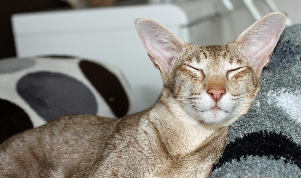 DIY Katzenkissen rund naehen
