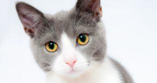 Impfung Katzenallergie