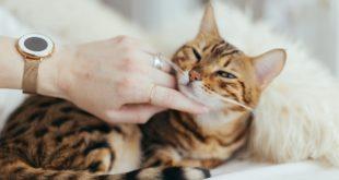 Katzen Fingerring selber machen