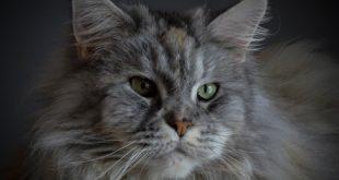 Katzen Oesterreich